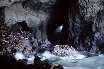 Sea lion caves florence oregon for Dean clinic fish hatchery